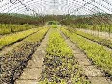 蓝莓育苗棚